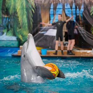 Дельфинарии, океанариумы Киржача