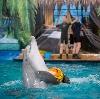 Дельфинарии, океанариумы в Киржаче