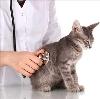Ветеринарные клиники в Киржаче
